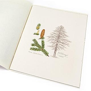 Lebensbaum Handzeichnung Tanne