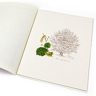Lebensbaum Haselnuss
