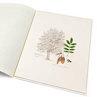 Lebensbaum Esche
